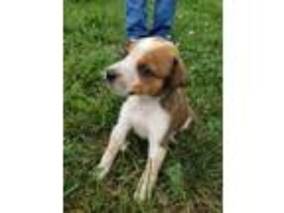 Adopt 664-7 Pluto a Hound (Unknown Type) dog in SMITHVILLE, TN (25877417)
