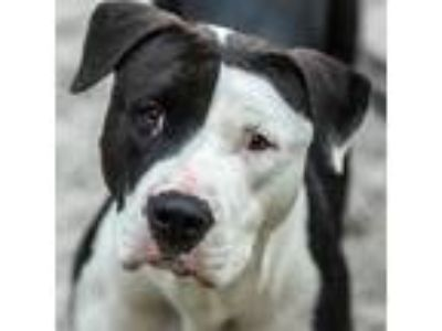 Adopt Cora a Mixed Breed, Terrier