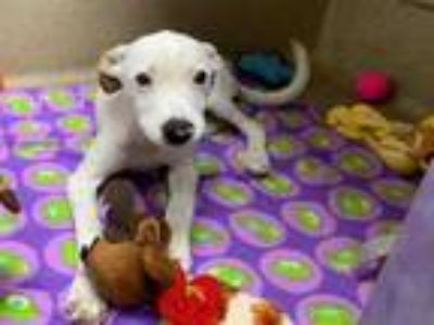 Adopt ROMULUS a Hound, Mixed Breed