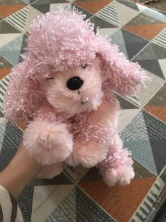 Cutest pink poodle puppy