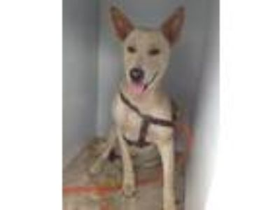 Adopt Tie a Husky / Mixed dog in Wauchula, FL (25597913)