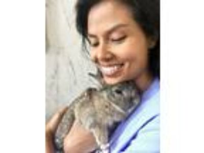 Adopt Not ready to adopt yet? Be a Foster Parent! a Bunny Rabbit