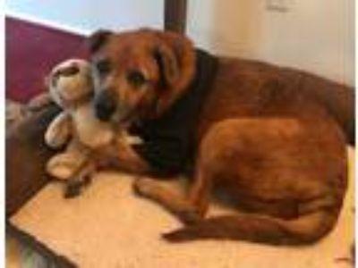 Adopt Tita a Tan/Yellow/Fawn Shepherd (Unknown Type) / Mixed dog in Edgewater