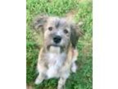Adopt Slinky a Terrier, Mixed Breed