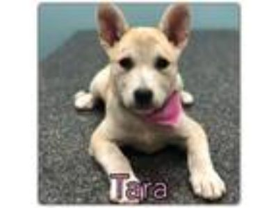 Adopt Tara *FOUND ON THE SIDE OF THE ROAD a Siberian Husky
