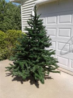 Christmas Tree for Sale *Reduced*