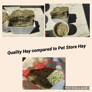 Quality 100% Timothy Hay BETTER DEAL THAN PETSTORE