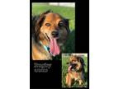 Adopt Rugby a Shepherd, Collie