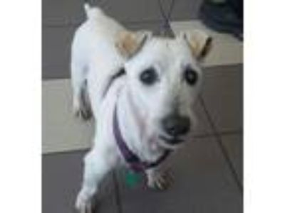 Adopt Rugby a Terrier