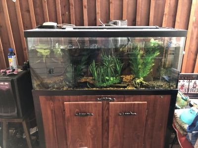 75 gallon fish tank with stand