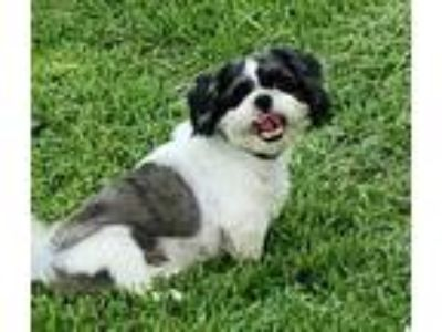 Craigslist - Dogs for Adoption Classifieds in Pearland, Texas - Claz org