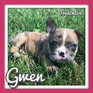 Gwen Female Frenchton