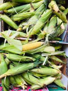IN SP HILL CITY LIMITS Fresh Totally Organic Local Grown Sweet Corn On The Cob -limited supply