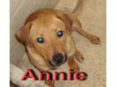 Adopt Annie a Tan/Yellow/Fawn - with White Terrier (Unknown Type