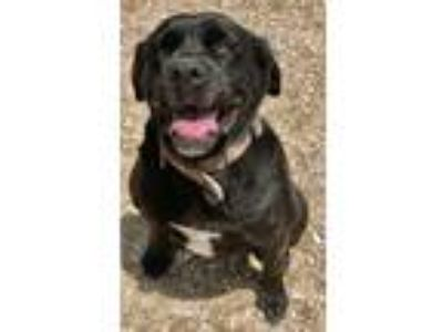 Craigslist Dogs For Sale Or Adoption Classifieds In Grove