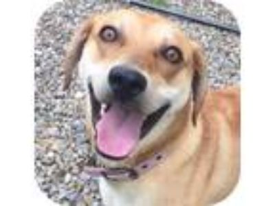Adopt Jeff 25938-d a Brown/Chocolate Mixed Breed (Large) / Mixed dog in Ithaca