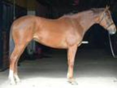 Adopt Mission Trip a Thoroughbred