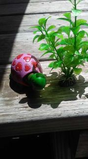 Cute lil Aquarian turtle and plant $3.00 ppu