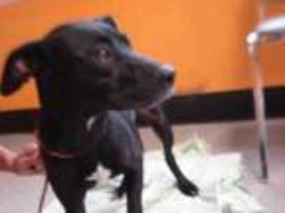 Adopt Stray - Kingbird Ter - Avail 5-17 a Black Retriever (Unknown Type) / Mixed