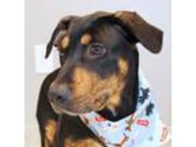 Adopt Anderson Pooper a Black Mixed Breed (Large) / Mixed dog in Lansing