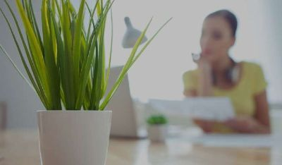Buy indoor plants that naturally purify indoor air