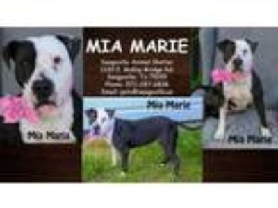 Adopt Mia Marie a White American Pit Bull Terrier / Mixed dog in SEAGOVILLE