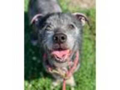 Adopt Mel a Black Terrier (Unknown Type, Small) / Mixed dog in Norfolk