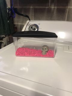 Small fish tank with rocks and skull.