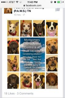 ADOPTIONS NEEDED! At ANIMAL CONTROL , FULL CAPSCITY!!hours til 7pm on Thurs