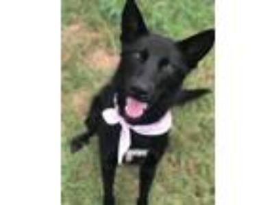Adopt BLOSSOM a Black Shepherd (Unknown Type) / Mixed dog in Pilot Point
