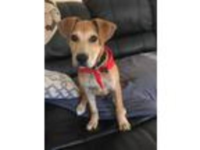 Adopt Roger a Mixed Breed