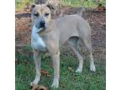Adopt Jenna a Tan/Yellow/Fawn German Shepherd Dog dog in Lake Panasoffkee