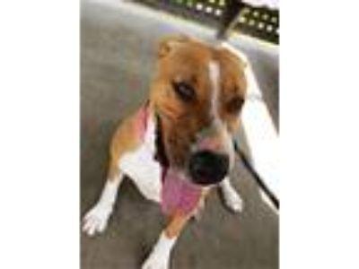 Adopt Nana a Hound (Unknown Type) / Mixed dog in Corpus Christi, TX (24712517)