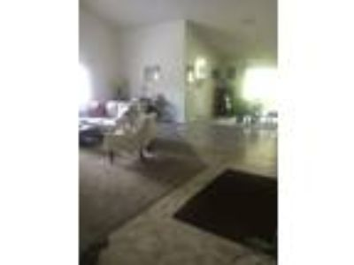 Craigslist Rooms For Rent Classified Ads In Palm Coast South