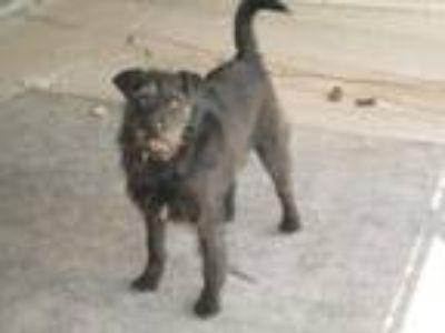 Adopt Dixiedew a Terrier