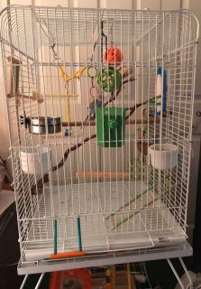 Wired Bird Cage/Toys & Rolling Stand