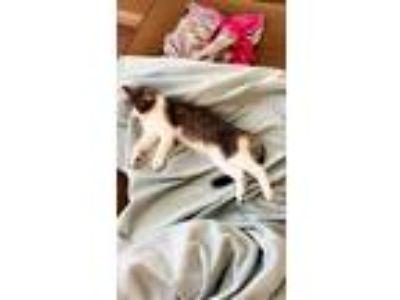 Craigslist Jonesboro Ar Pets Jonesboro Pets 2020 10 03