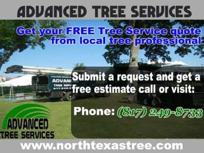 Advanced Tree Services !!Tree Service Fort worth