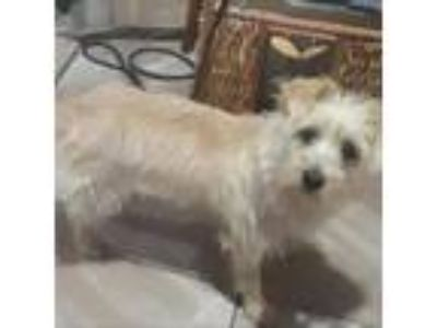 Adopt Emily a Tan/Yellow/Fawn Terrier (Unknown Type, Small) dog in Island Park