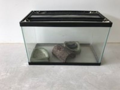 10 gallon aquarium