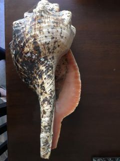 Giant conch shell
