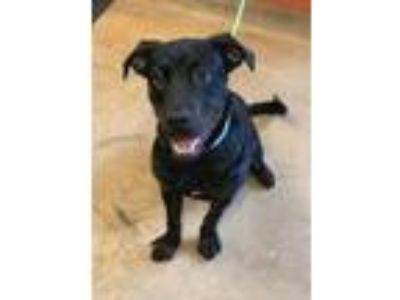 Craigslist - Dogs for Adoption Classifieds in St Cloud