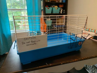Guinea cage and hay feeder