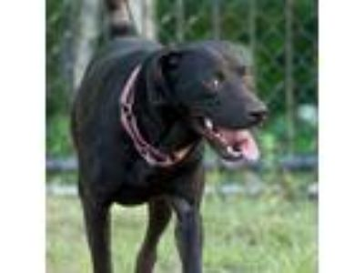 Adopt Efram a Black Shepherd (Unknown Type) dog in Jacksonville, FL (25559824)