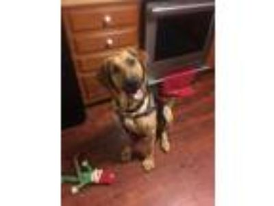 Adopt Lexi a Tan/Yellow/Fawn - with Black Shepherd (Unknown Type) / Hound