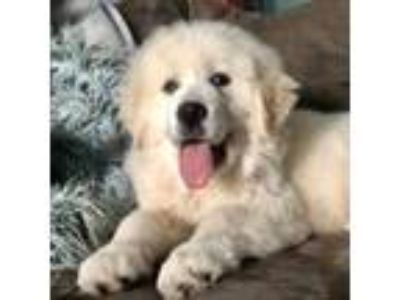 Adopt Polar a Mixed Breed