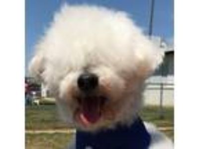 Puppy - For Sale Classifieds in Twin Oaks, California - Claz org