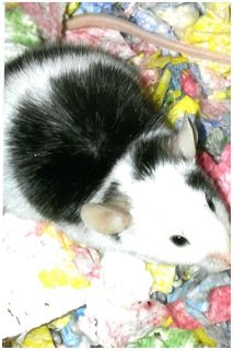 b-w and patches need great and forever homes.
