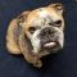 Vagabond English Bulldog Dog