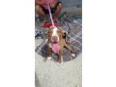 Adopt Rylee a Pit Bull Terrier